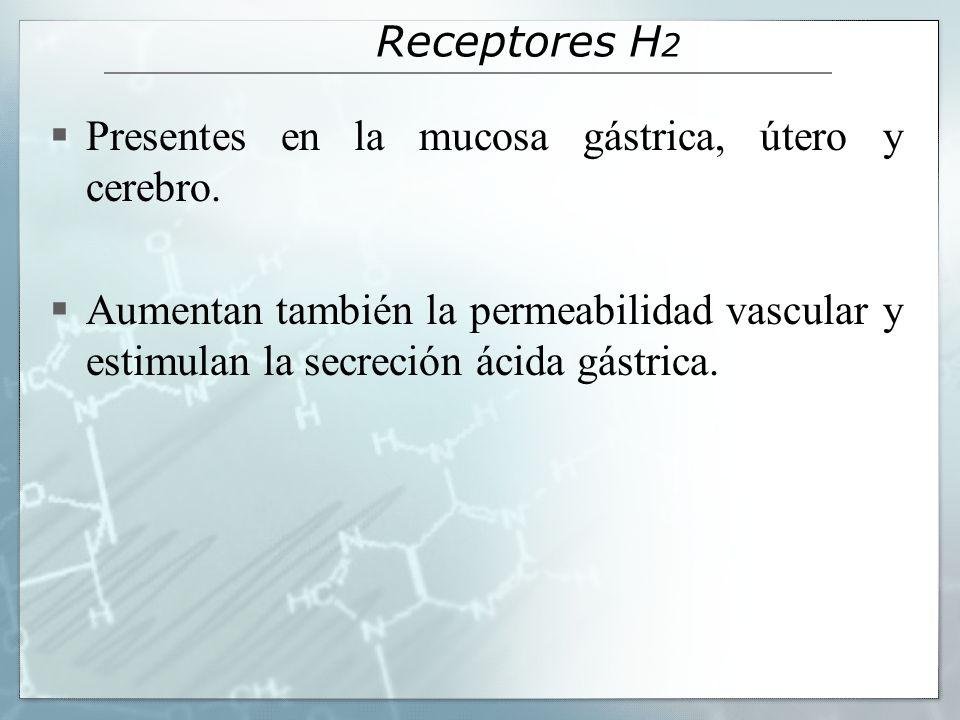 Receptores H2 Presentes en la mucosa gástrica, útero y cerebro.