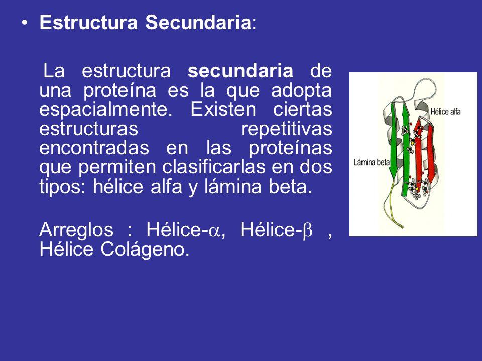 Estructura Secundaria: