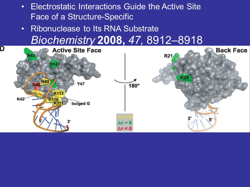 Electrostatic Interactions Guide the Active Site Face of a Structure-Specific