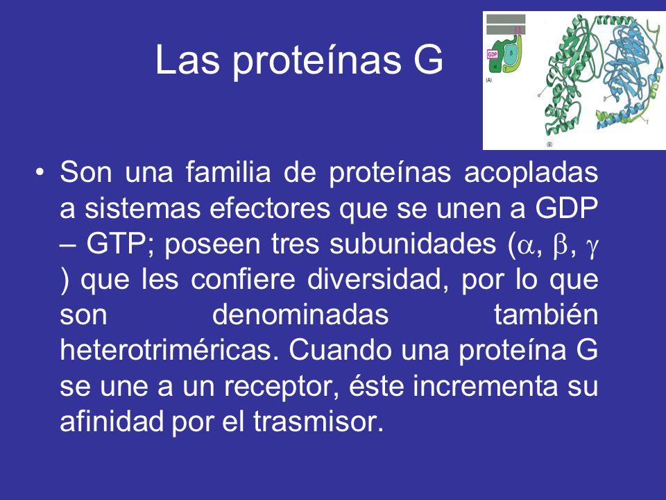 Las proteínas G