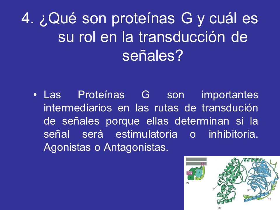 4. ¿Qué son proteínas G y cuál es su rol en la transducción de señales