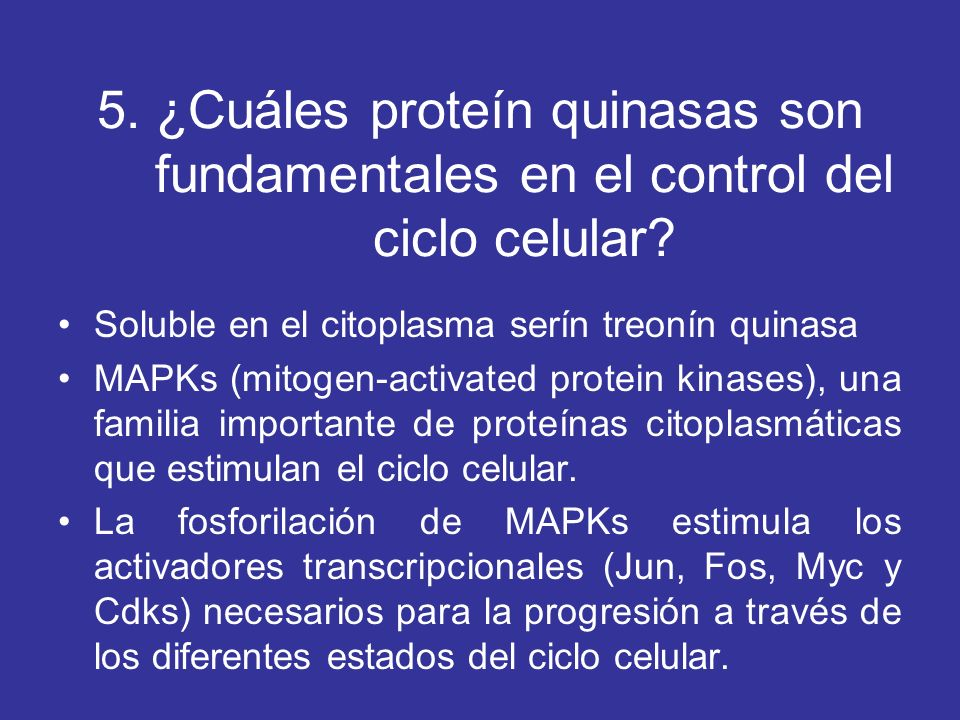 5. ¿Cuáles proteín quinasas son fundamentales en el control del ciclo celular