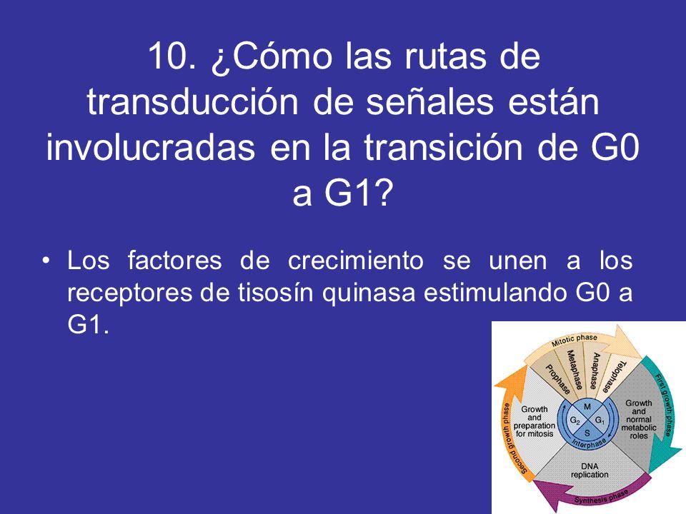 10. ¿Cómo las rutas de transducción de señales están involucradas en la transición de G0 a G1