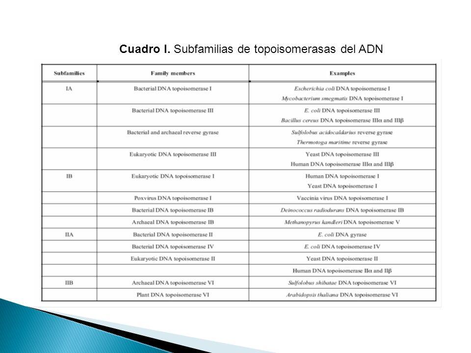 Cuadro I. Subfamilias de topoisomerasas del ADN