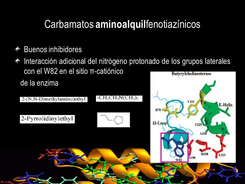 Carbamatos aminoalquilfenotiazínicos