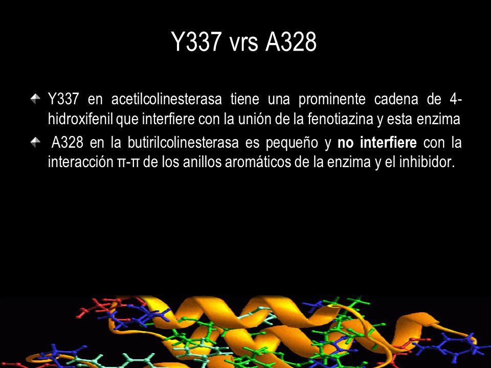 Y337 vrs A328 Y337 en acetilcolinesterasa tiene una prominente cadena de 4-hidroxifenil que interfiere con la unión de la fenotiazina y esta enzima.