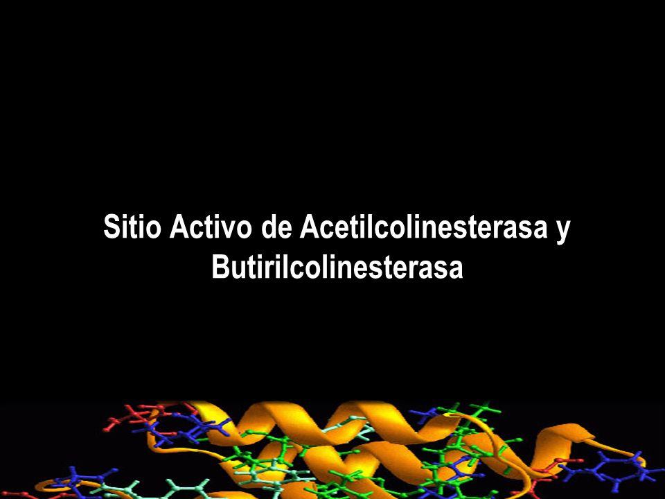 Sitio Activo de Acetilcolinesterasa y Butirilcolinesterasa