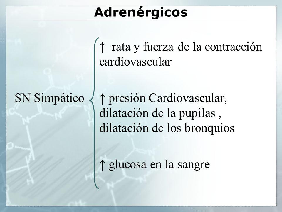 Adrenérgicos ↑ rata y fuerza de la contracción cardiovascular.