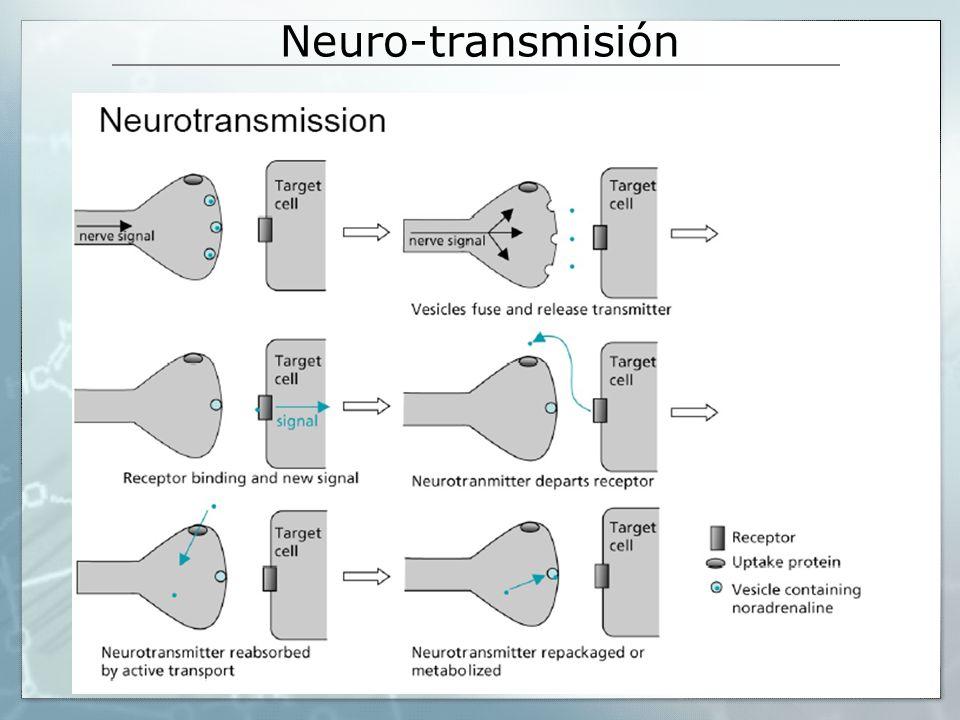 Neuro-transmisión