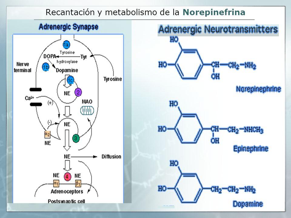 Recantación y metabolismo de la Norepinefrina