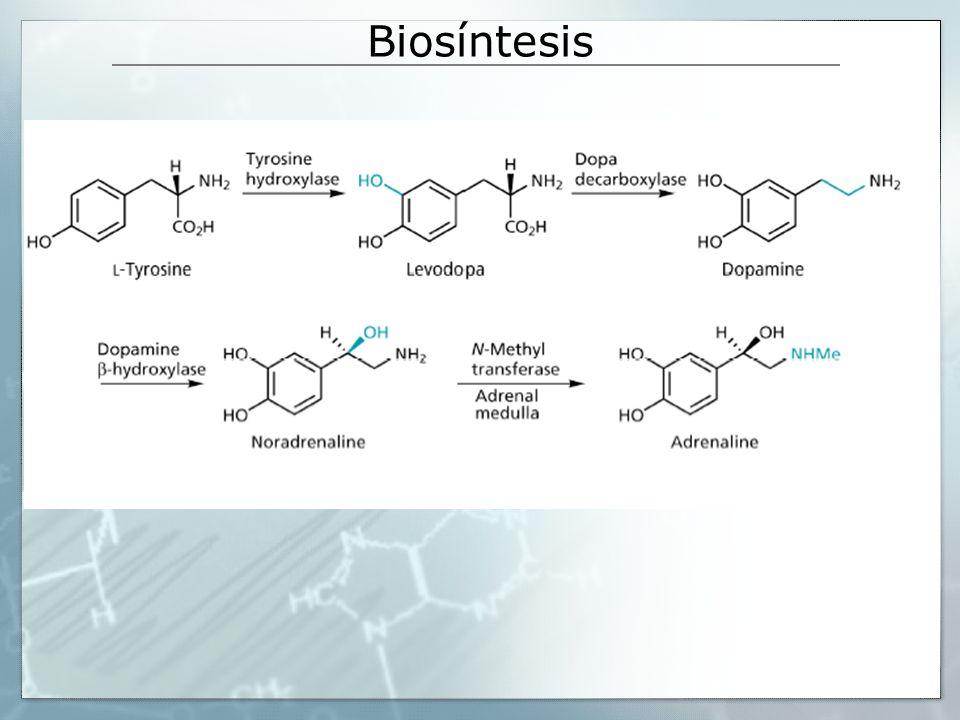 Biosíntesis