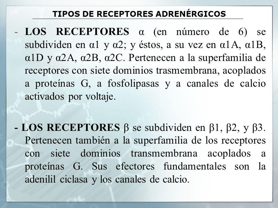 TIPOS DE RECEPTORES ADRENÉRGICOS