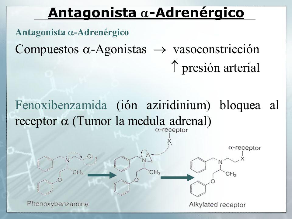 Antagonista -Adrenérgico