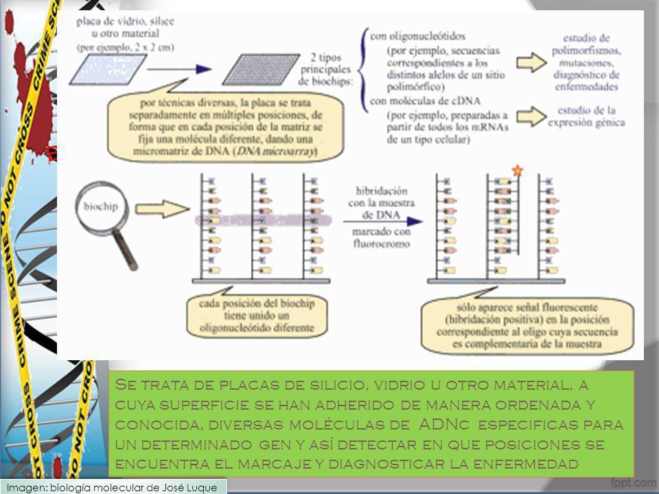 biochips, genochips o genosensores