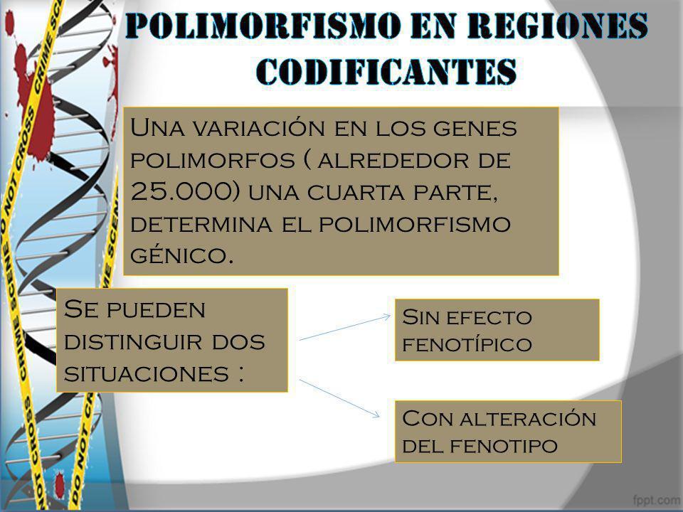 Polimorfismo en regiones codificantes