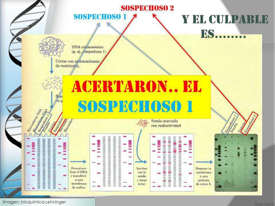 ACERTARON.. EL SOSPECHOSO 1