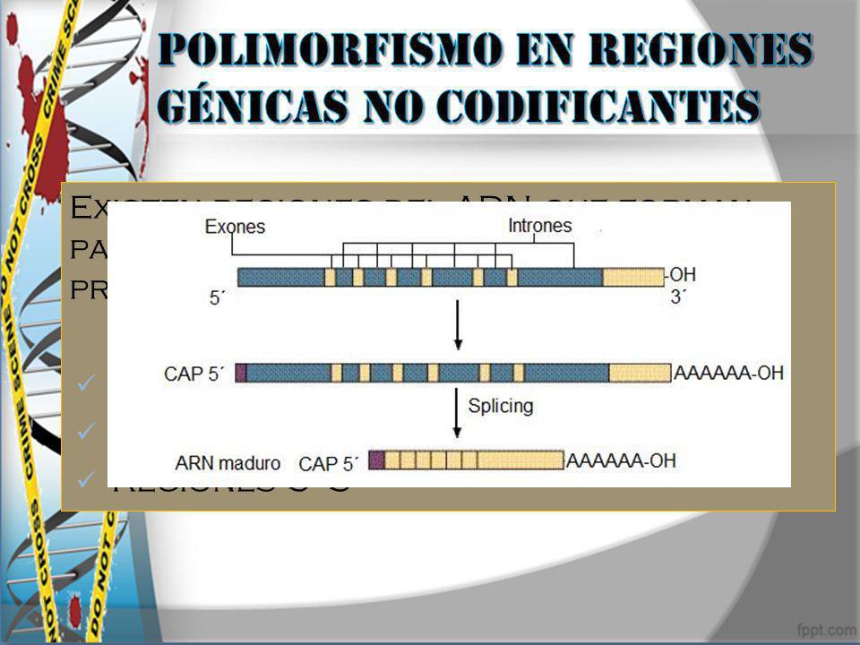 Polimorfismo en regiones génicas no codificantes