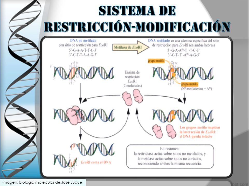 SISTEMA DE RESTRICCIÓN-MODIFICACIÓN