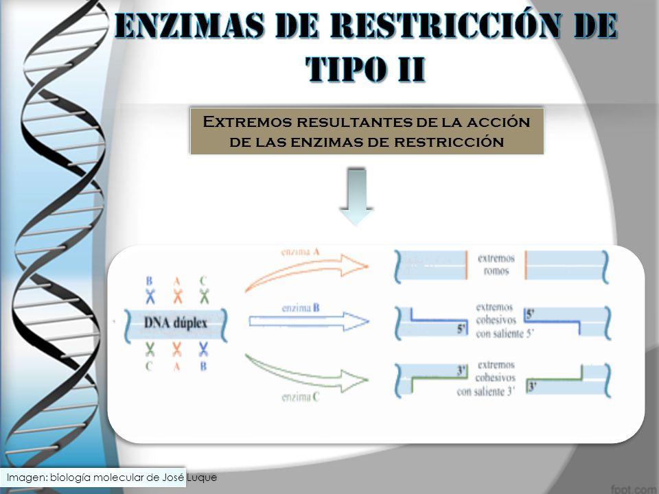 ENZIMAS DE RESTRICCIÓN DE TIPO II