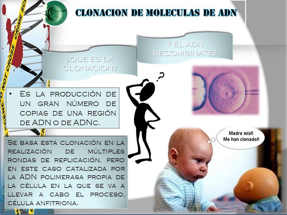 CLONACION DE MOLECULAS DE ADN