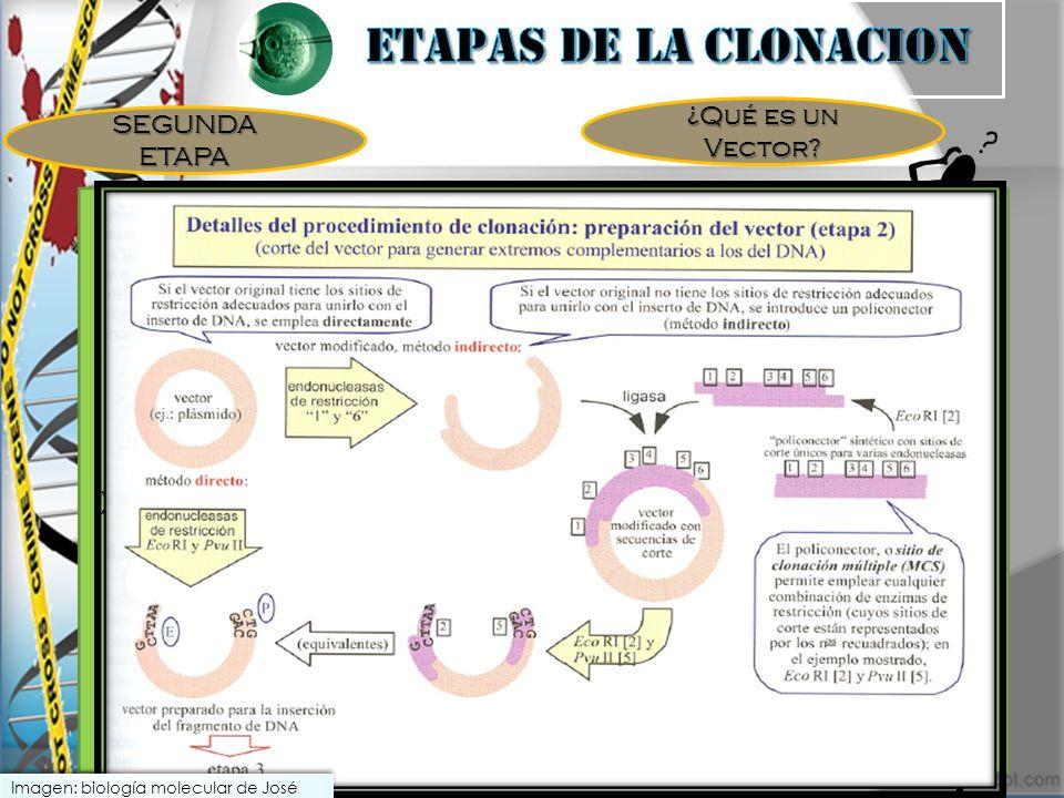 ¿Qué es un Vector SEGUNDA ETAPA