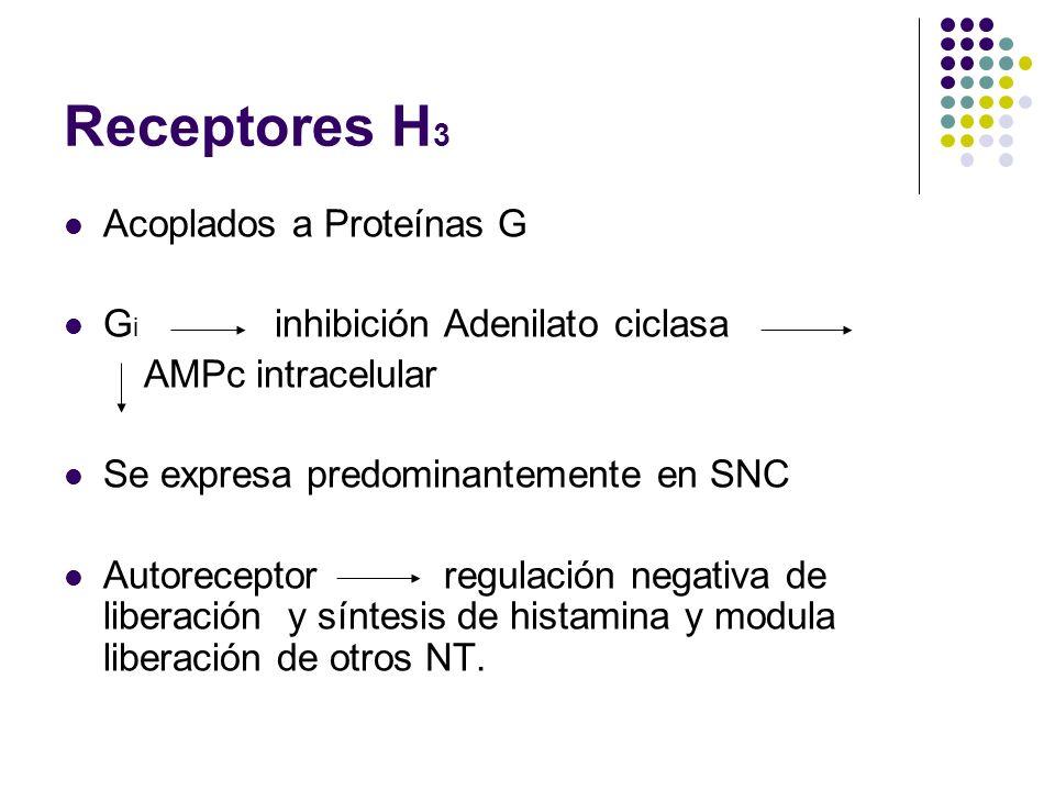 Receptores H3 Acoplados a Proteínas G Gi inhibición Adenilato ciclasa