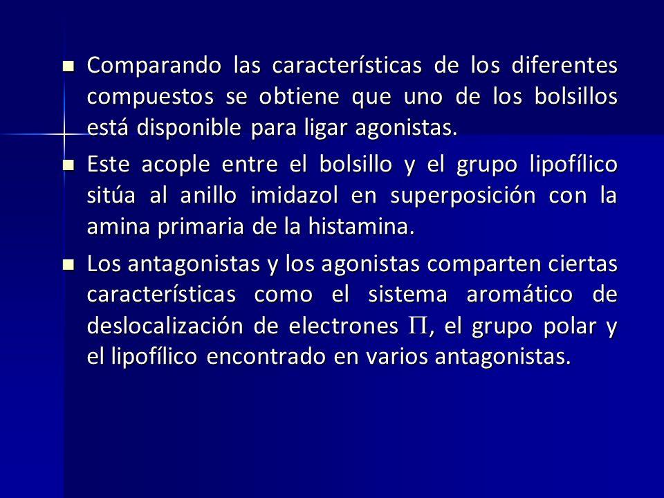 Comparando las características de los diferentes compuestos se obtiene que uno de los bolsillos está disponible para ligar agonistas.