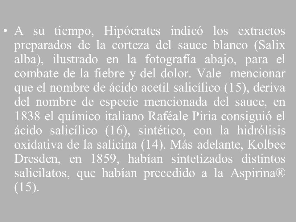 A su tiempo, Hipócrates indicó los extractos preparados de la corteza del sauce blanco (Salix alba), ilustrado en la fotografía abajo, para el combate de la fiebre y del dolor.