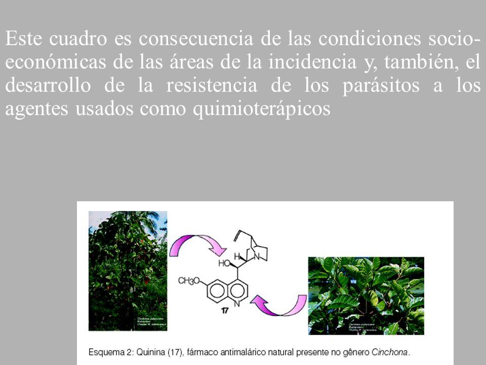 Este cuadro es consecuencia de las condiciones socio-económicas de las áreas de la incidencia y, también, el desarrollo de la resistencia de los parásitos a los agentes usados como quimioterápicos