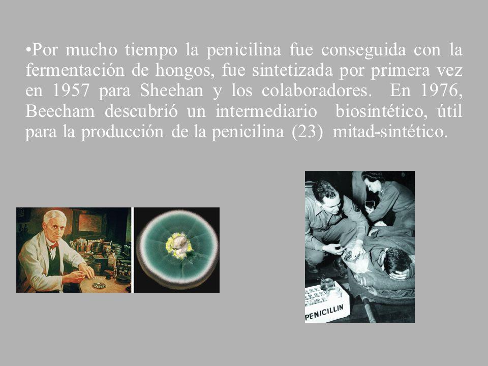 Por mucho tiempo la penicilina fue conseguida con la fermentación de hongos, fue sintetizada por primera vez en 1957 para Sheehan y los colaboradores.
