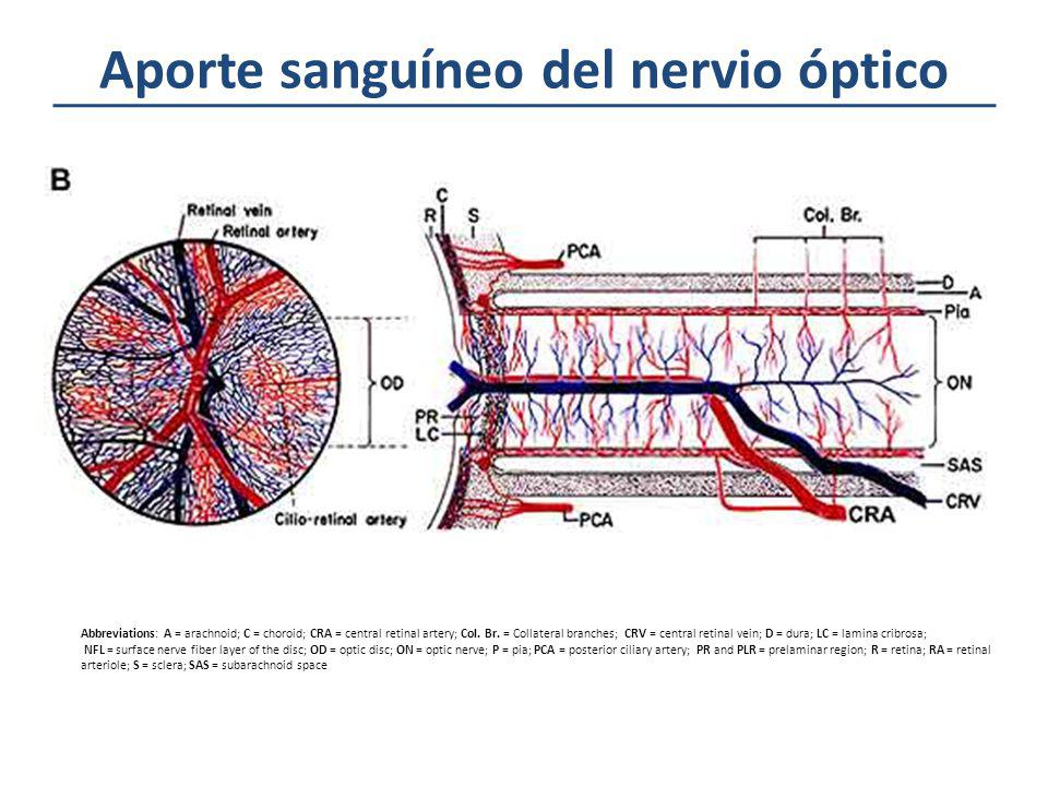 Aporte sanguíneo del nervio óptico