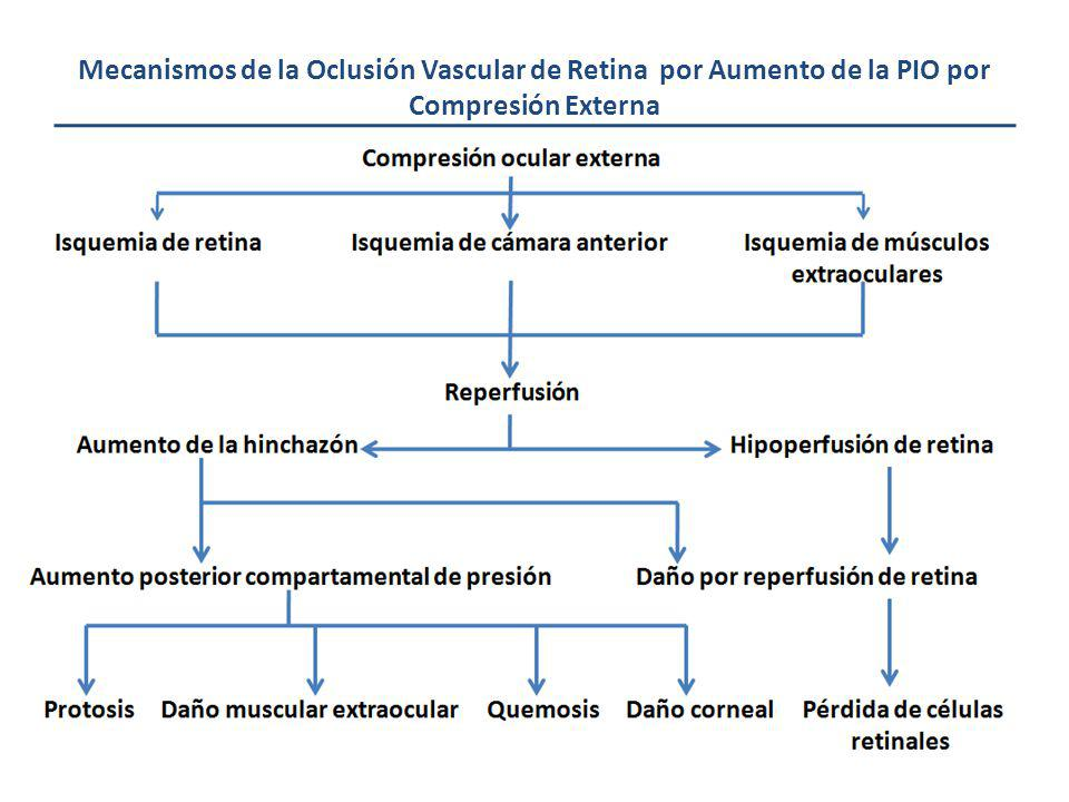 Mecanismos de la Oclusión Vascular de Retina por Aumento de la PIO por Compresión Externa