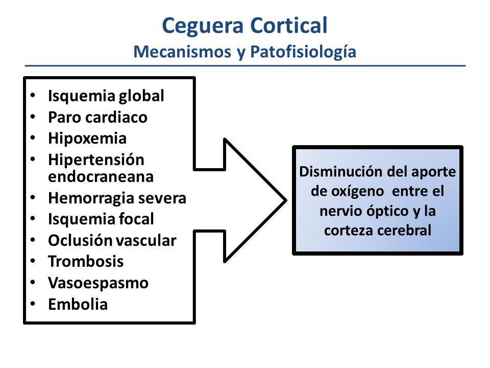 Ceguera Cortical Mecanismos y Patofisiología