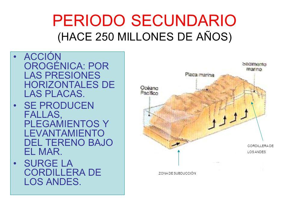 PERIODO SECUNDARIO (HACE 250 MILLONES DE AÑOS)