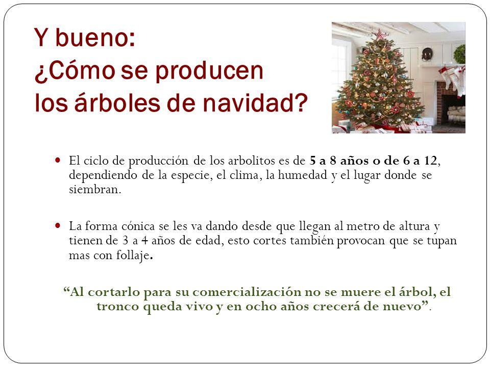 Y bueno: ¿Cómo se producen los árboles de navidad