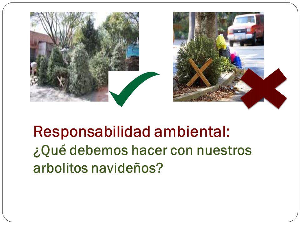 Responsabilidad ambiental: ¿Qué debemos hacer con nuestros arbolitos navideños
