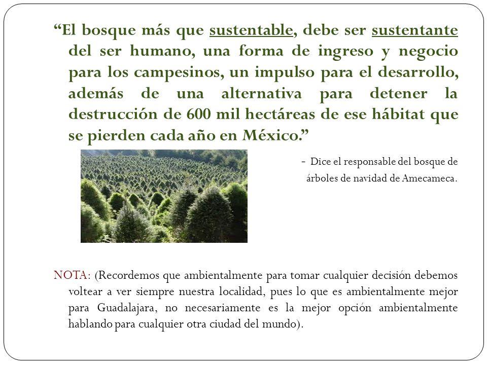 - - Dice el responsable del bosque de árboles de navidad de Amecameca.
