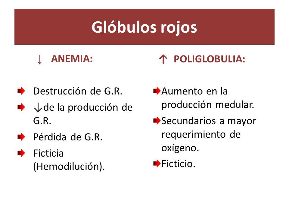 Glóbulos rojos ↓ ANEMIA: Destrucción de G.R. ↓de la producción de G.R.