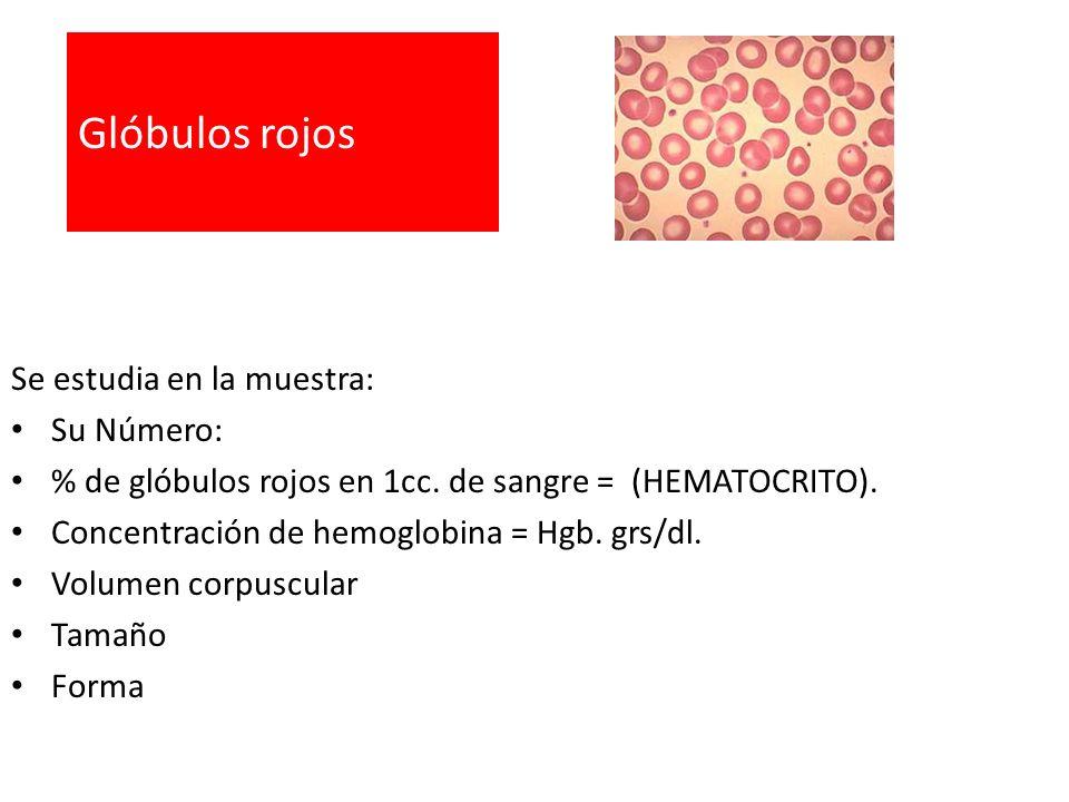 Glóbulos rojos Se estudia en la muestra: Su Número: