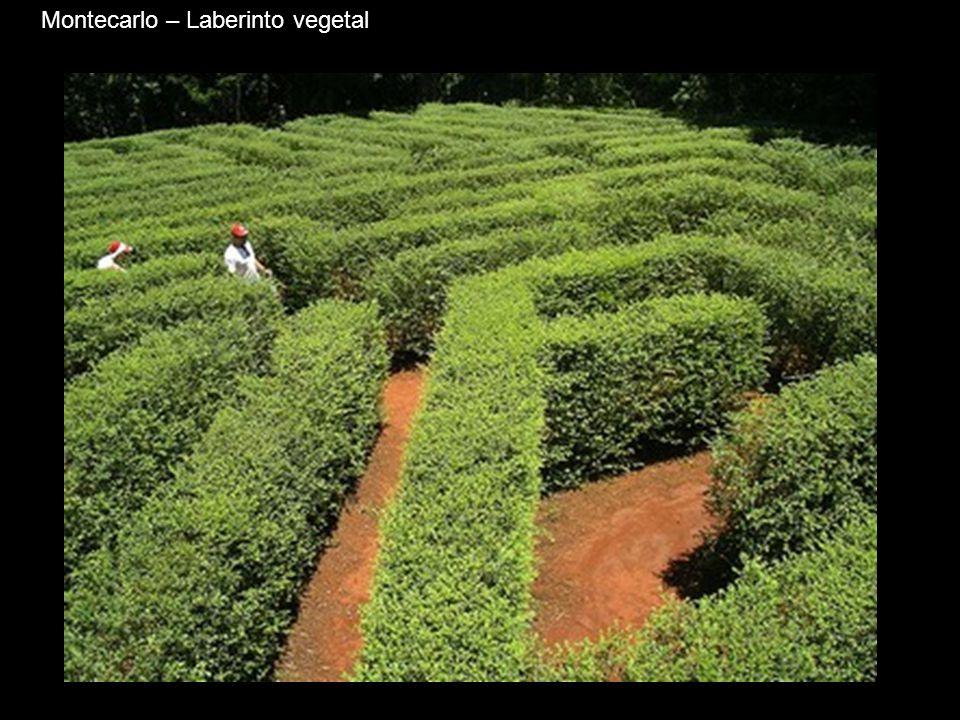 Montecarlo – Laberinto vegetal