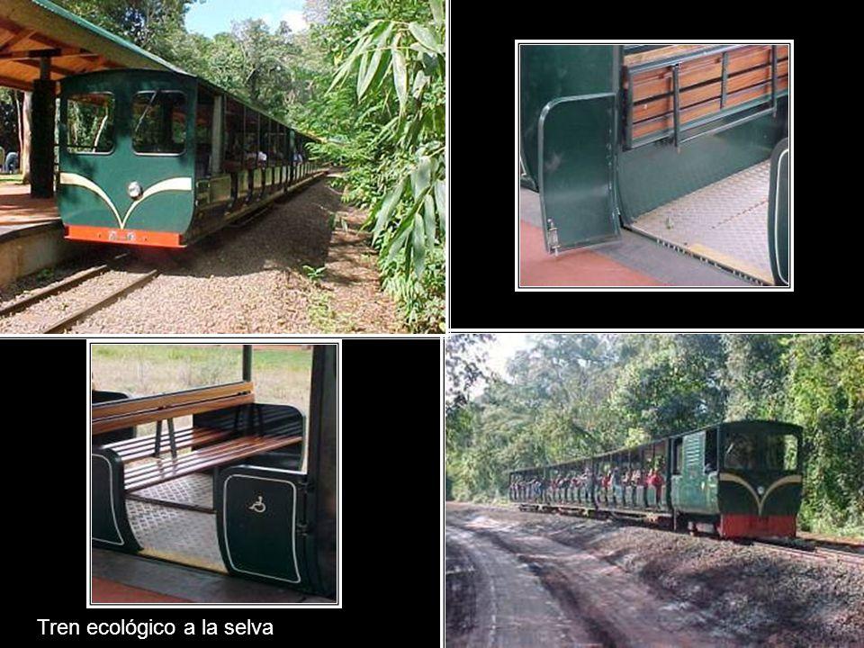 Tren ecológico a la selva