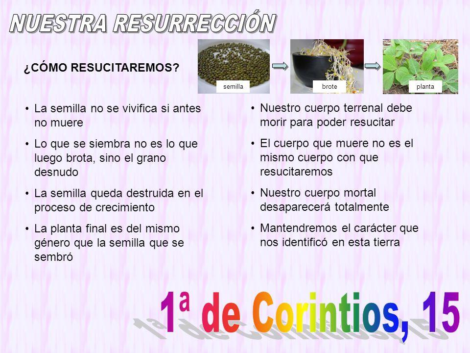 NUESTRA RESURRECCIÓN 1ª de Corintios, 15 ¿CÓMO RESUCITAREMOS