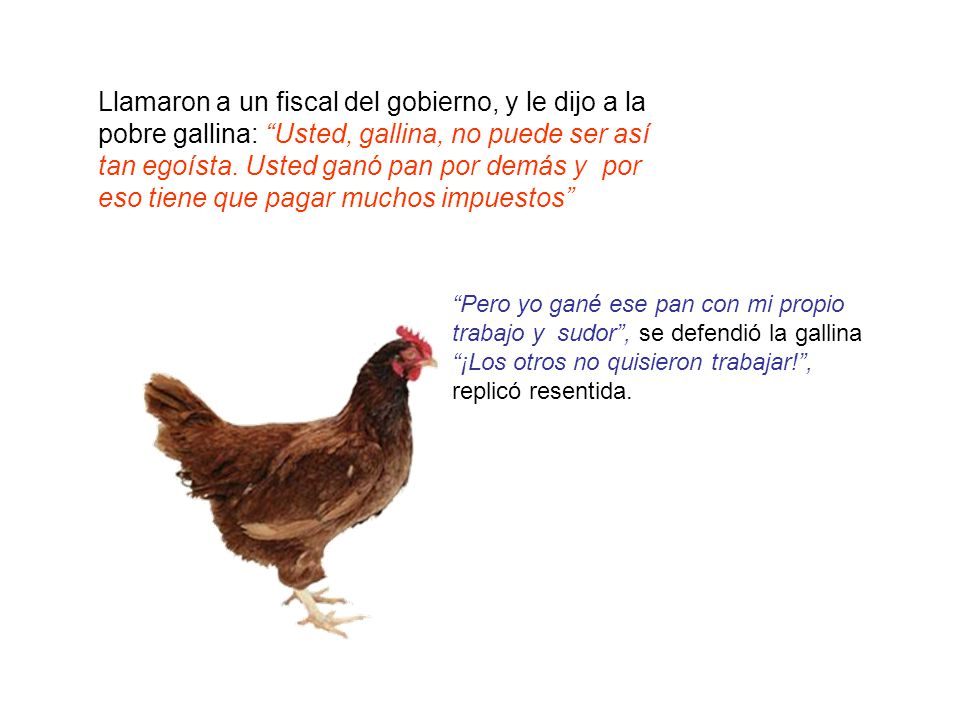 Llamaron a un fiscal del gobierno, y le dijo a la pobre gallina: Usted, gallina, no puede ser así tan egoísta. Usted ganó pan por demás y por eso tiene que pagar muchos impuestos