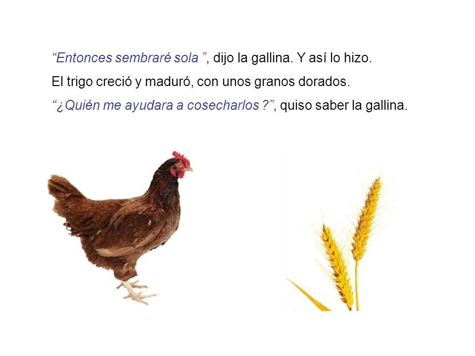 Entonces sembraré sola , dijo la gallina. Y así lo hizo.