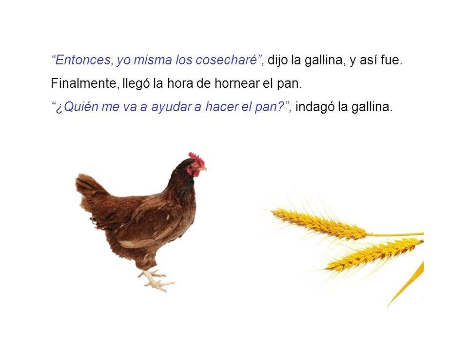 Entonces, yo misma los cosecharé , dijo la gallina, y así fue.