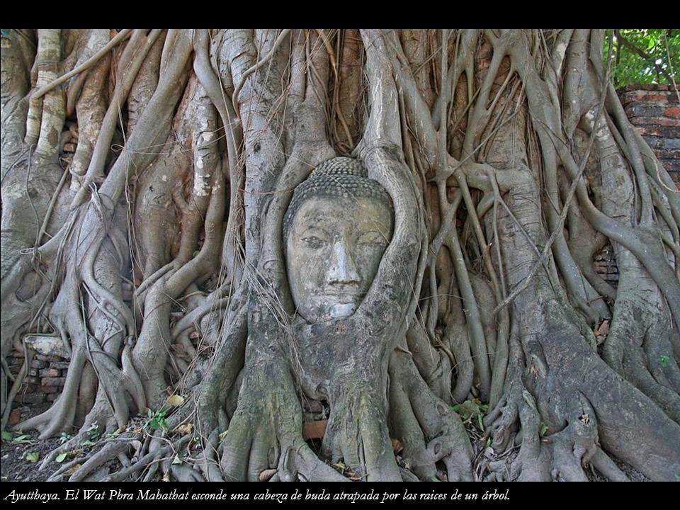 Ayutthaya. El Wat Phra Mahathat esconde una cabeza de buda atrapada por las raices de un árbol.