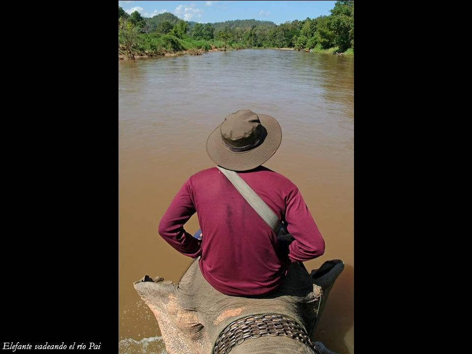 Elefante vadeando el río Pai