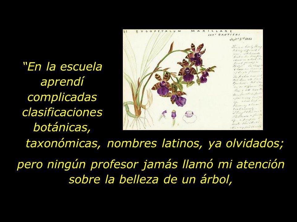 En la escuela aprendí complicadas clasificaciones botánicas,