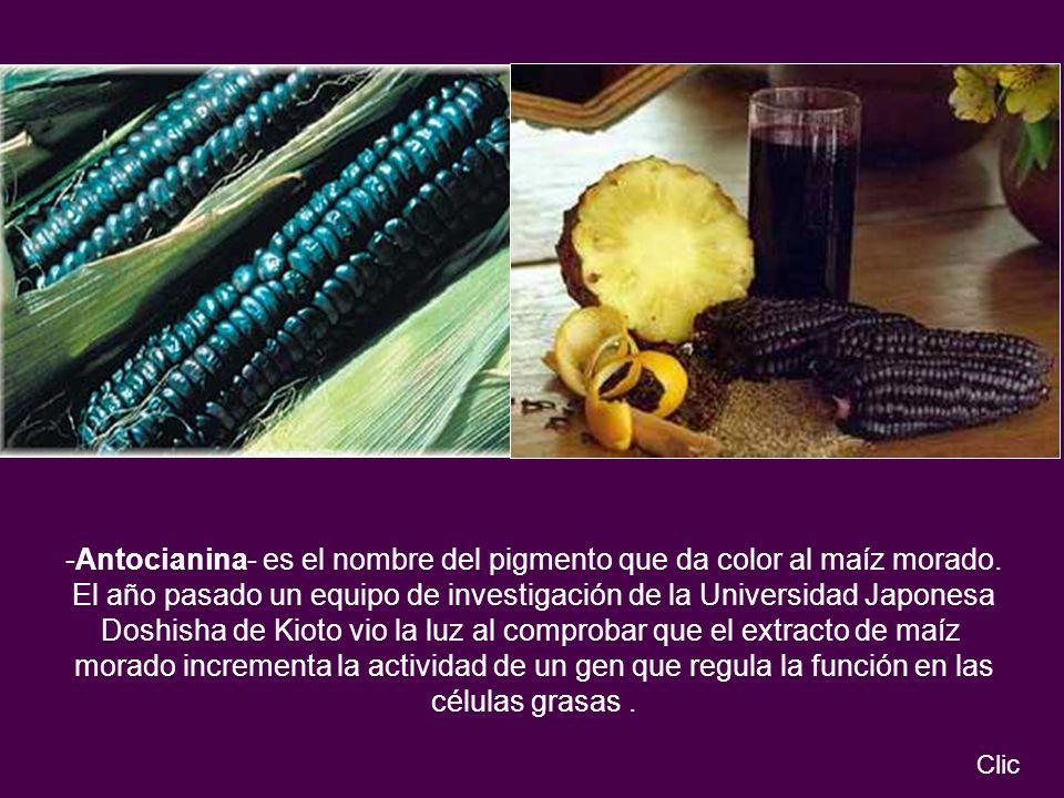 -Antocianina- es el nombre del pigmento que da color al maíz morado.