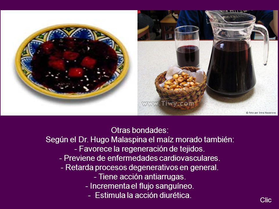 Según el Dr. Hugo Malaspina el maíz morado también: